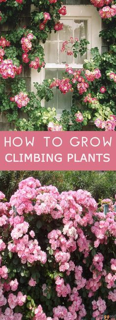 12 Fast-Growing Flowering Vines for Your Garden | Gardens and ... on
