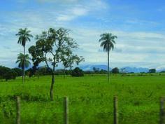 Auténtico llano venezolano #Turismo #Venezuela #Viajes  #Llanos