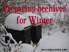 All about how to prepare your beehives for winter--what to do, when to do it, how much food your bees need, and winterizing your hives. From the Runamuk Acres Farm & Apiary.  runamukacres.com