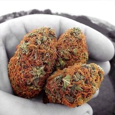 -Ginger Pubes Marijuana-  Repined-5280mosli.com -Organic Cannabis College-Top Shelf Marijuana-   #OrganicCannabis