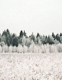 Snowy Forest :: Hous