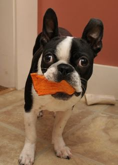Sweet Potato Dog Chew Recipe -  Awesome alternative to Rawhide and your dog will LOVE them! Easy to make, MUCH cheaper than store bought and loaded with beneficial nutrients like Vitamin E, Vitamin B6, Potassium, and Iron.