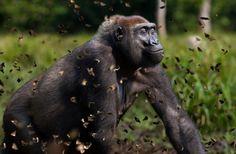 45 Awe-Inspiring Examples of Animal Photography - BlazePress