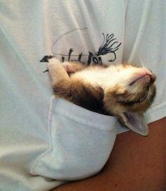 25-animais-que-pegam-no-sono-em-qualquer-lugar-10