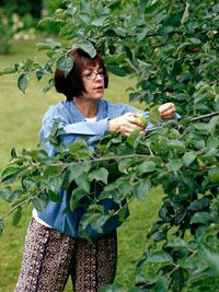 Florida fruit trees on pinterest fruit trees fig tree and how to