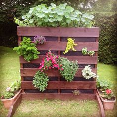 Popular Types Of Herb Gardens – Handy Garden Wizard Types Of Herbs, Pallette, Herb Garden, Landscaping, Nature, Plants, Gardens, Plant Wall, Flowers