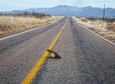 Sombrero perdido en la carretera a Naco, Sonora.