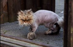 Word - LOLcats is the best place to find and submit funny cat memes and other silly cat materials to share with the world. We find the funny cats that make you LOL so that you don't have to. Silly Cats, Cats And Kittens, Funny Cats, Funny Animals, Cute Animals, Animal Funnies, Silly Jokes, Crazy Cat Lady, Crazy Cats