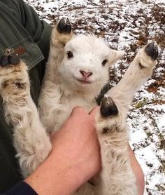12 Adorable Baby Goats | Tongue in Chic