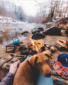 Great Camping HacksWhen it relates to camping outdoors, much like everything else, there will always be some terrific ideas and camping cheats which makes the getaway a bit easier, if not also down right more fun. Cute Baby Animals, Animals And Pets, Funny Animals, Cute Puppies, Cute Dogs, Dogs And Puppies, Doggies, Dog Pictures, Animal Pictures