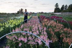 Succession Planting: How To Keep The Harvest Going All Season Long (Floret Flower Farm) Growing Flowers, Cut Flowers, Planting Flowers, Succession Planting, Future Farms, Flower Farmer, Cut Flower Garden, Hardy Perennials, No Rain