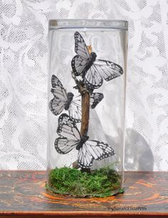Check out this item in my Etsy shop https://www.etsy.com/listing/239149156/butterfly-decorationbutterflies-in-a