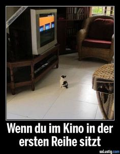 Wenn du im Kino in der ersten Reihe sitzt – reihe When you sit in the front row in the cinema – line theater Cute Funny Animals, Funny Cats, Word Pictures, Funny Pictures, Life Slogans, Baby Cats, Baby Kitty, Baby Animals, Be A Nice Human