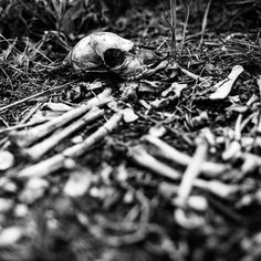 A tiny bag of bones uncovered and a demonic toy. Paranormal Experience, Weird Stories, Bones, Toy, Clearance Toys, Toys, Dice, Legs