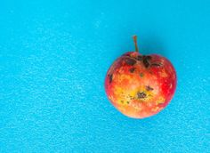 Here's How We Solve Our Food Waste Problem