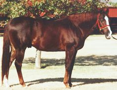 Simply put, Dash For Cash became the definition of Quarter Horse racing as soon as he stepped onto the track in March of 1975. He was inducted into the Hall of Fame in 1997. Learn more about the AQHA Hall of Fame inductees at http://aqha.com/Foundation/Museum/Hall-of-Fame/Hall-of-Fame-Inductees.aspx .