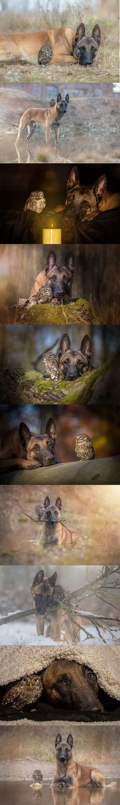 Owl & dog are unlikely animal friends! Animals And Pets, Baby Animals, Funny Animals, Cute Animals, I Love Dogs, Cute Dogs, Unlikely Friends, Amor Animal, Odd Couples
