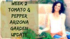 How To Grow Tomato & Pepper Plants Outdoors - Arizona Raised Bed Vegetab...