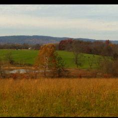 Wine country in Loudoun County VA