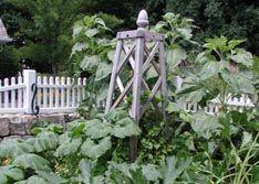 Vertical Support Vegetable Gardening