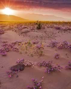 Spring in Death Valley, California