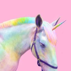 "veryprivateart: "" Photo based digital art by Ramzy Masri aka Space Ram Teen Girl at Heart, Rainbow Witch, Nickelodeon Design, NYC Queer "" Unicorn Store, Unicorn Art, Rainbow Unicorn, Unicorn Pics, Happy Unicorn, Baby Animals Super Cute, Cute Little Animals, Handsome Jack, Unicorns And Mermaids"