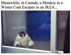 cold monkey!