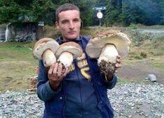 Raccolta di funghi porcini straordinaria in Sila