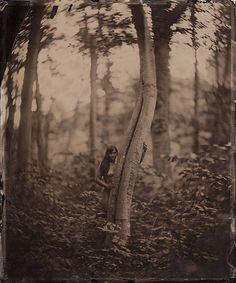 Robin in Woods, Joseph P. Smigiel