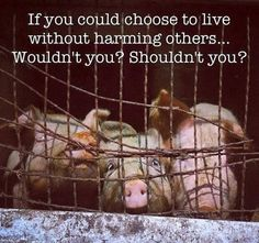 if you could choose to live without harming others ... wouldn't you? shouldn't you? #vegan