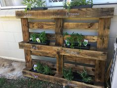 Turning an old pallet into a herb garden