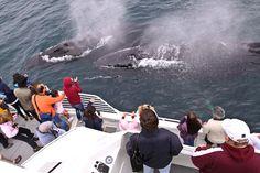 Condor Whale Watching - Santa Barbara