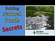 Secrets to Building Natural Ponds the Right Way (New Method) - YouTube