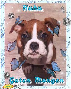 Dogs, Animals, Good Morning, Animales, Animaux, Pet Dogs, Doggies, Animal, Animais