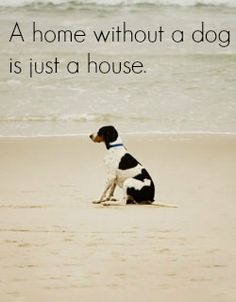 dog or cat - om my World - love both <3