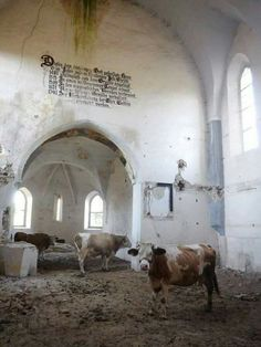 Fortified Transylvania-Saxon (Lutheran) church of Dobârca, Sibiu County, Romania (via FB by Lutz Connert)[ Abandoned Buildings, Abandoned Places, Shadow Theme, The Seventh Seal, Mulberry Street, Cow Art, Lutheran, My Land, Animal Paintings