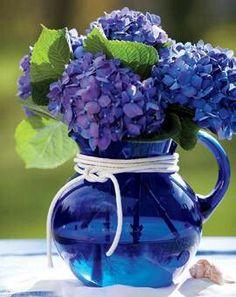 Hydrangeas in cobalt pitcher
