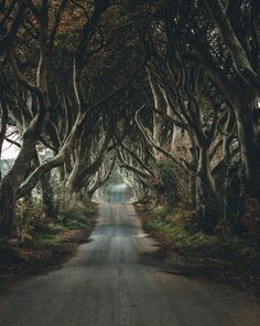 The dark hedges in Northern-Ireland (OC) x : EarthPorn Dark Hedges Ireland, Hedge Trees, Belfast Northern Ireland, Forest Path, Beautiful Waterfalls, Beautiful Scenery, Ireland Landscape, New Travel, Landscape Photographers