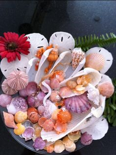 Thank you Jane for sharing your Easter Shell Basket! Shells And Sand, Sea Shells, Sky Sunset, Shell Beach, Sanibel Island, Seashell Crafts, Shell Art, Ocean Life, Sea Creatures