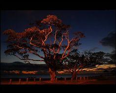 30 Creepiest Trees on Earth [pics]