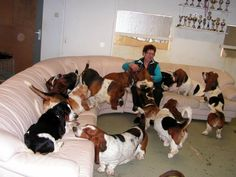 "Is there any such thing as a ""crazy dog lady""? No! Cuz it's just the right thing to do.. don't just get one...."