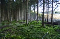 Forest | by tim_gorman