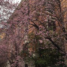 Primavera chegando! #roma #rome #receitaitaliana #receitas #receita #recipe #ricetta #cibo #culinaria #italia #italy #cozinha #belezza #beleza #viagem #travel #beauty #buongiornoroma #thisisrome #igersroma #lamiaroma #romaandyou #noidiroma #primavera #spring #flores #fiori #flowers