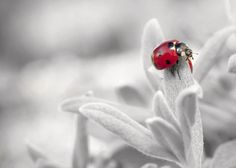 Is the ladybug spirit animal bringing you messages lately? Find out what they mean here, along with why the ladybug is good luck and symbolism. Color Photography, White Photography, Nature Photography, Photography Ideas, Inspiring Photography, Landscape Photography, Free Pictures, Free Images, Spirit Animal