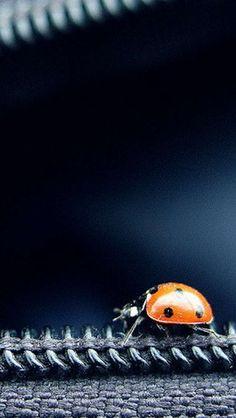 Ladybug On Zipper