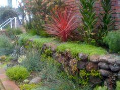 Moss  Rock w/ plants