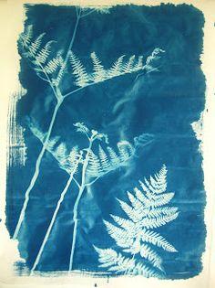 Hannah Lamb: Woodland Cyanotypes
