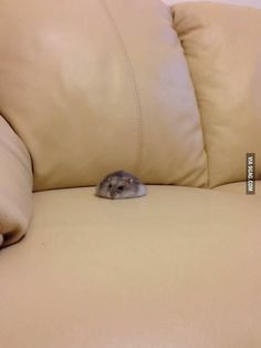 I totally wish my hamster would do this without trying to run everywhere