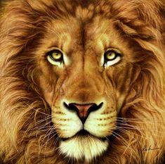Lion by Karen Kutoloski