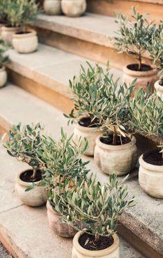 Plantation, Topiary, Dream Garden, Garden Inspiration, Garden Ideas, Container Gardening, Indoor Plants, Garden Landscaping, House Plants